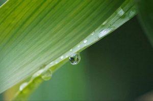 Manfaat Garcinia Nutrivite — Komposisi alami dan banyak ulasan positif
