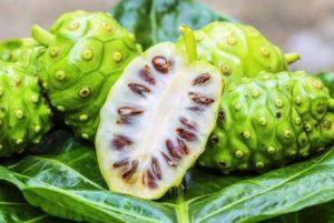 Komposisi Detocline — Morinda Citrifolia (Mengkudu)