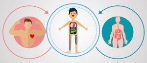 Mengapa Detoksifikasi Masuk Akal — tubuh itu sendiri bisa pulih, tapi kita harus membantunya
